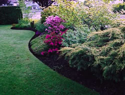 Landscaping Servicein Long Beach